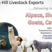 Mariah Hill loves Alpacas