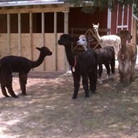 Rockville Alpaca Farm