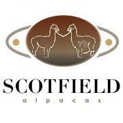 Scotfield Alpacas