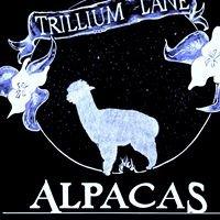 Trillium Lane Alpacas