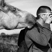 Stephen Higgins Photography