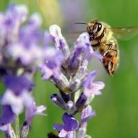 OPG Pčelarstvo Ferbežar