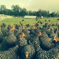 Freshies Farm