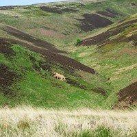 Lammermuir Hills