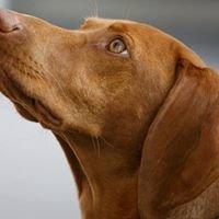 Dogs Lounge - tierisch lecker & gesund
