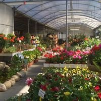 Garden L'Aràlia