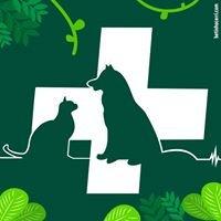 Animal Planet Hospital Veterinário
