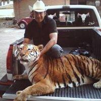 Taxidermista En Toluca Mexico