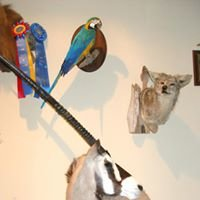 ArtisticWildlife Taxidermist