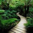 The Jungle Extreme Fun Park