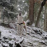 ASB Rettungshundestaffel Siegen KV Witten