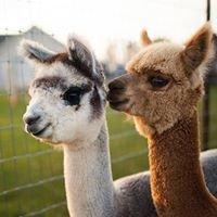 Sabamba Alpaca Ranch and Bed & Breakfast llc