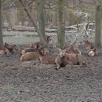 Wildpark Rheingönnheim