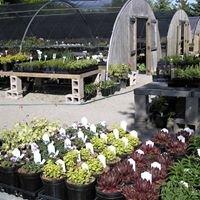 Rose-Hill Gardens