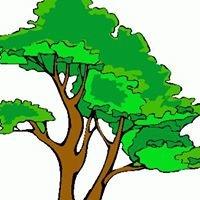 Forest Governance Integrity Programme