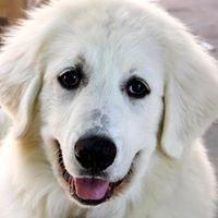 RPV Dog Park (Ranchos Caninos Dog Park)