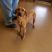 Pickens County Animal Shelter