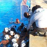Royhil Seals Water Polo Club