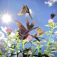 Las Mariposas también hacen Yoga en Ibiza