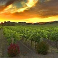 Temecula Valley & Murrieta Ca Homes for Sale & Wineries Realtor