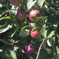 Carver Hill Orchard