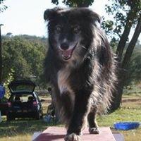 Duke's Academy for Dogs