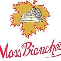 Prosecco Valdobbiadene DOCG Mass Bianchet