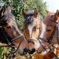 Reitverein der Pferdefreunde Münchsmünster e.V.