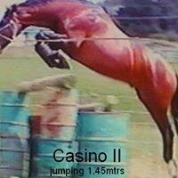 Hollywood Spanish Horses NZ