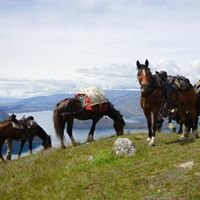 Adventure Horse Trekking NZ Limited