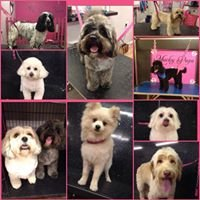 Mucky Pups Dog Grooming Spas & Boutiques 02920-233336