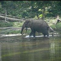 Explorer le Congo Brazzaville