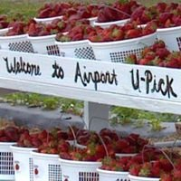 Airport U-Pick Strawberries