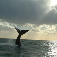 Whales Patagonia -Puerto Madryn-Argentina