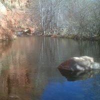 Clear Creek Tree Service
