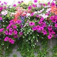 Carrick Flower Nurseries