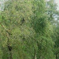 Forêt Harhoura