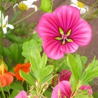 Billnäs Garden & Bistro