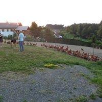 Graßmugg Hühnerstall-Tonis Freilandeier