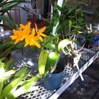 Kenyon's Greenhouse