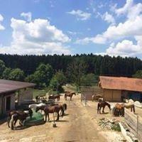 Ponyhof Eberhart