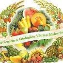 Agricultura Védica Maharishi