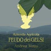 Azienda Agricola Feudo dei Gelsi