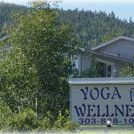 Conifer Yoga for Wellness