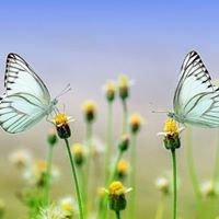 Innertrans - praktijk voor innerlijke groei