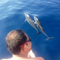 Bais City Dolphin Watching Manjuyod Sandbar and Sportfishing Adventures