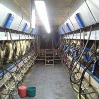 Veenhuizen Melkveehouderij