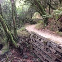 Dipsea Trail, Muir Woods National Monument