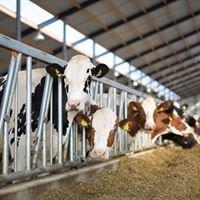 Melkveehouderij van Puijenbroek
