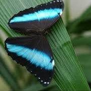 La Grange aux Papillons